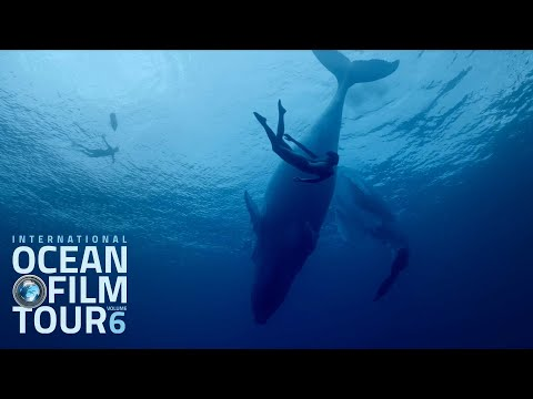 International OCEAN FILM TOUR Volume 6 | Official Trailer